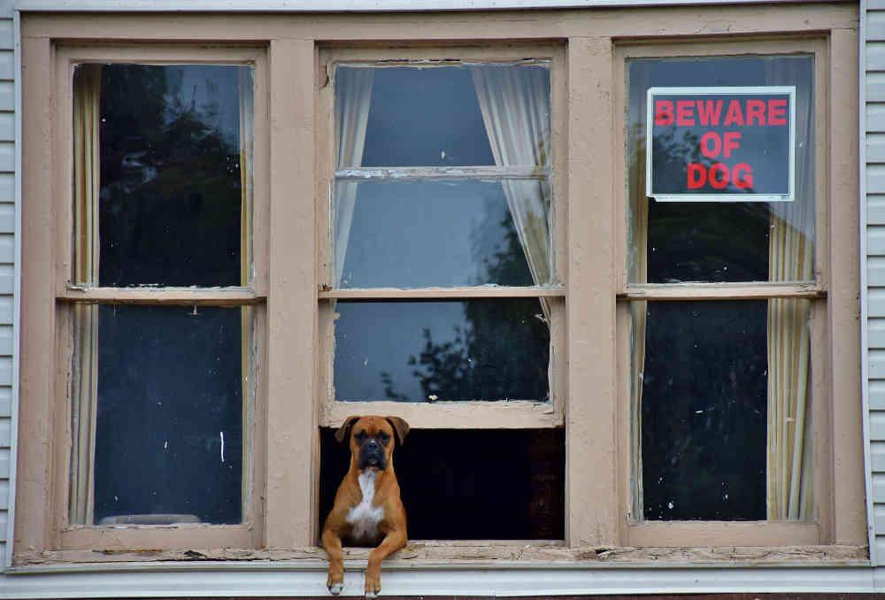 pet sitter - beware of dog