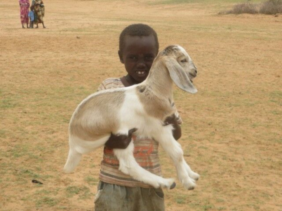Sudanese boy with goat