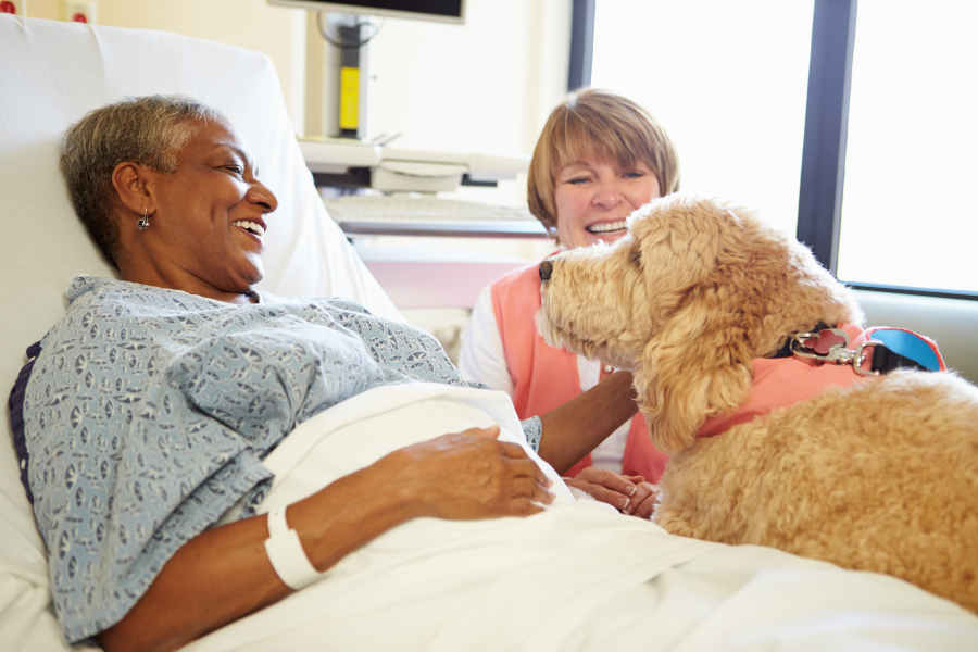Pet Therapy Dog Visiting Senior Female Patient In Hospital